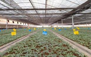 独特仿生种植技术体系打破三七连作障碍