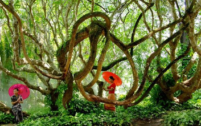 中国科学院西双版纳热带植物园新年活动等你来参与