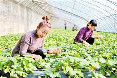2017年省委一号文件解读 促农业增效农民增收农村增绿