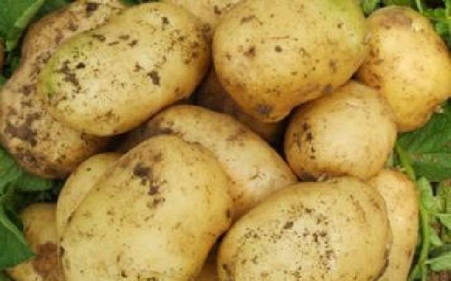 """薯来孰往?马铃薯优良品种""""合作88""""引热议"""