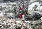 春雪穿树作飞花