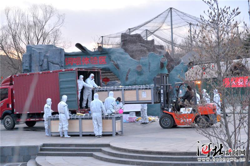 两只小海豚入驻石家庄动物园海洋馆