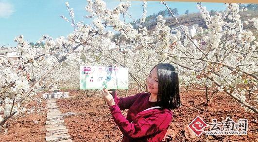 昭通鲁甸县小寨镇万亩樱桃花绽放