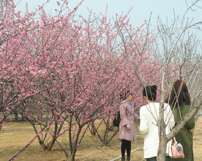 (信息)六大花展俏迎春 绿博园问花节将于3月25日启幕