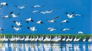 """辽河口国家级自然保护区里有一群""""鸟保镖"""""""