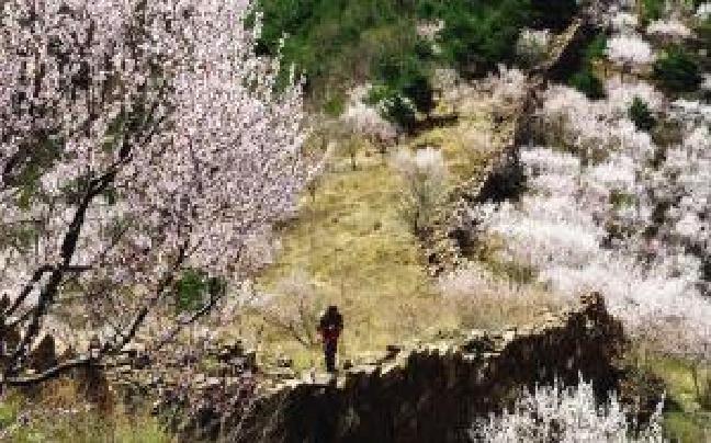 山野桃花始盛开 蓟州北部山花烂漫美不胜收
