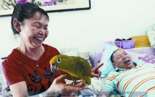 她训练的鹦鹉能歌善舞 只为博得患病丈夫一笑