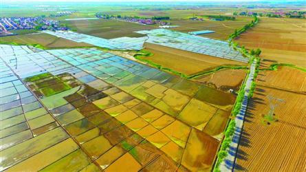 铁岭4333公顷旱田改成水田
