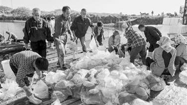 港湾养殖园捕捞海蜇苗
