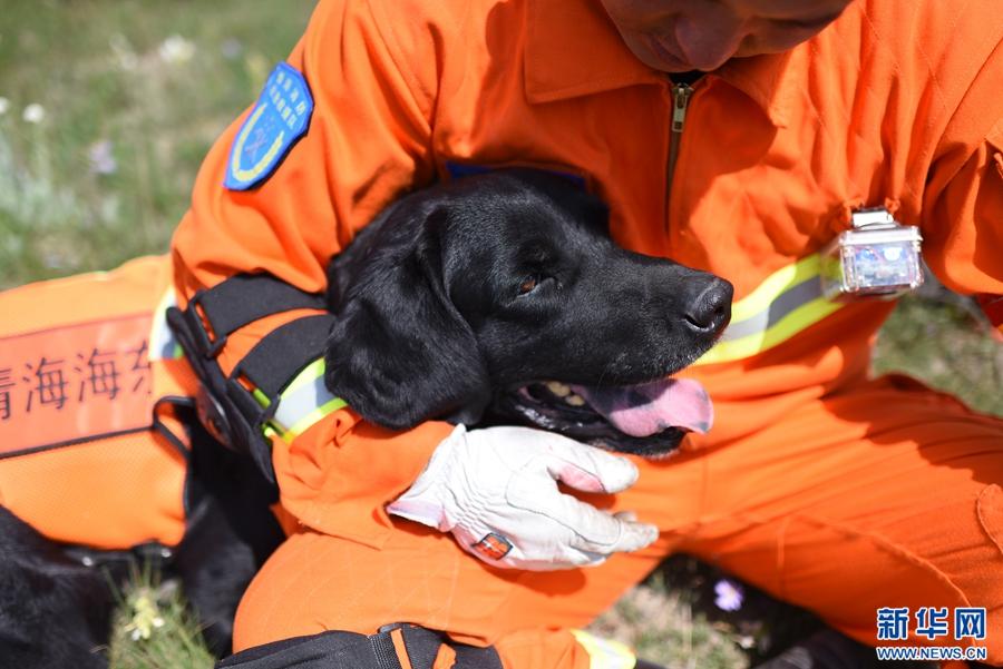 高原上的明星搜救犬