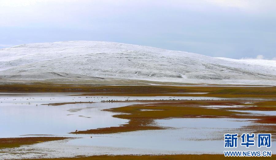 """青海""""千湖之县""""玛多迎来降雪 风景绝美"""