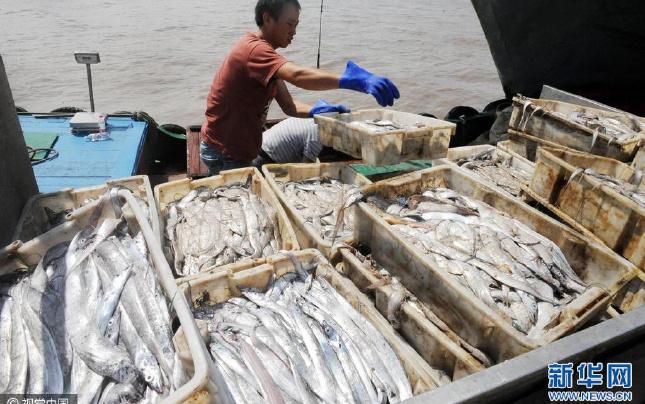 浙江舟山:台风过后 渔船归港渔满舱