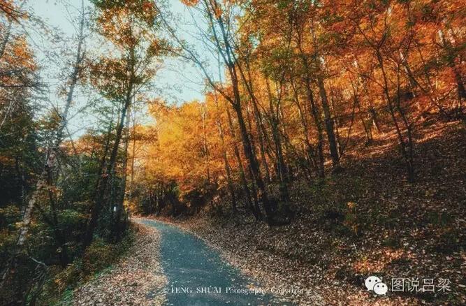 秋色吕梁,惊艳了时光