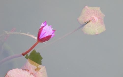 乡愁大理︱大理的花中雅事