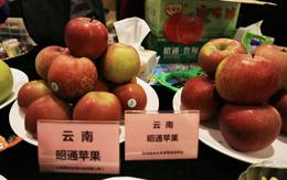 昆明农产品出口额5年增长35.1%