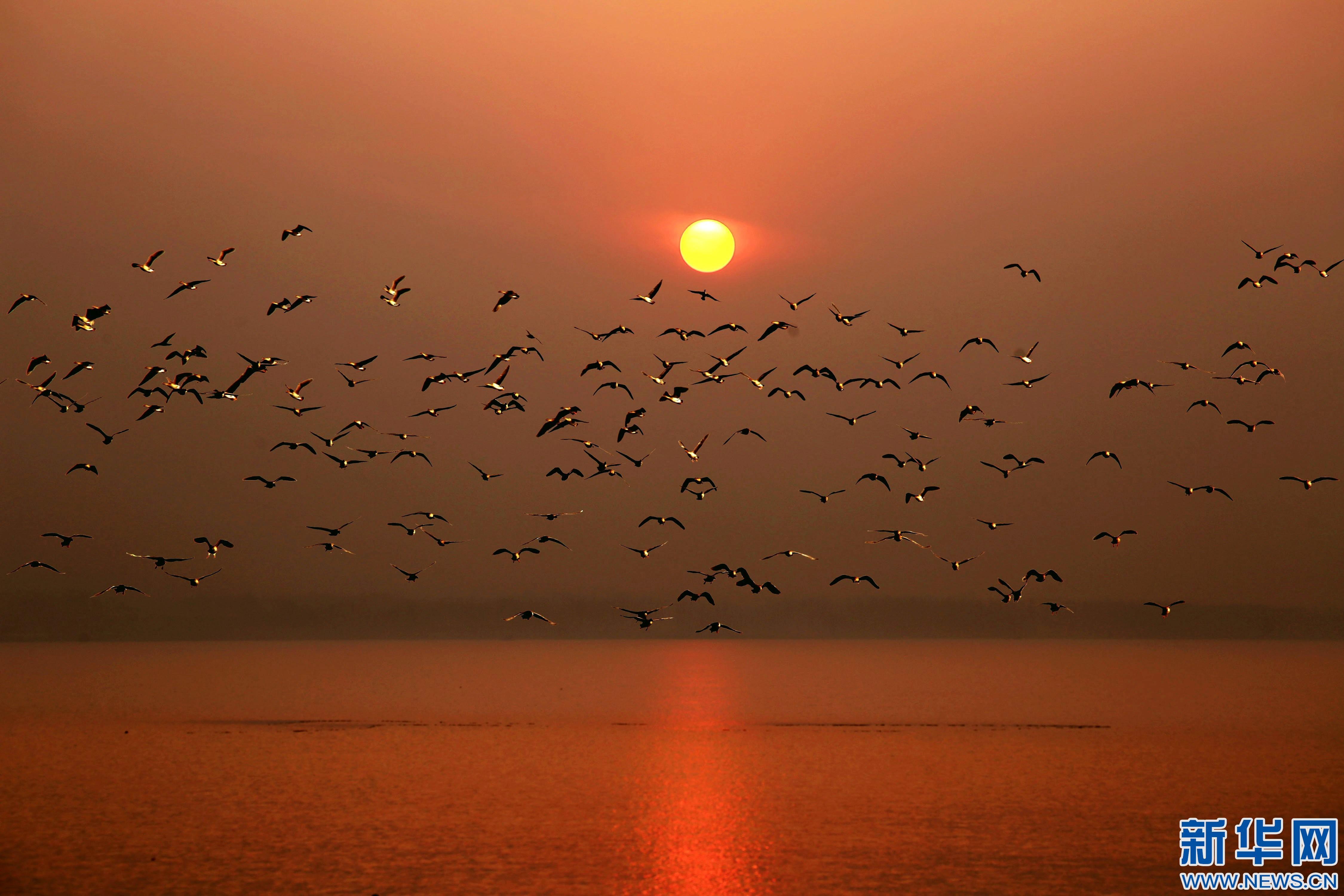 河北磁县迎来大批候鸟