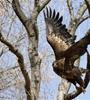 贵德黄河岸边现身珍稀鸟类