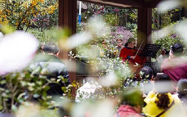 首届昆明植物园大美山茶古典音乐会举行