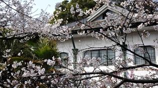 武汉大学预约赏樱首日迎万人观赏
