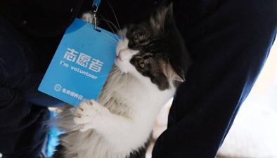 """在北京可以领养公益""""喵星人""""啦!"""