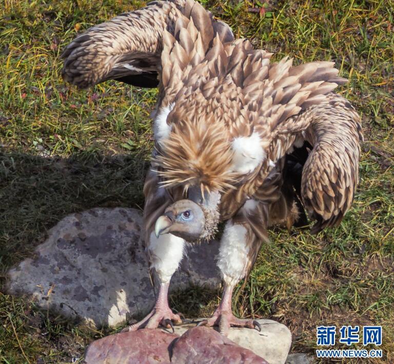 三江源地区或为我国兽类群落最丰富区域之一