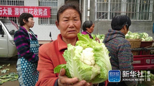 [第一回应]洋县积极为菜花寻找销路 3万余吨菜花已基本售完