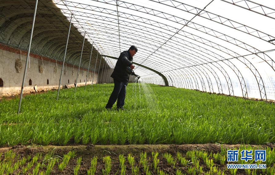 蓟州区出头岭镇大力发展库区高效生态农业