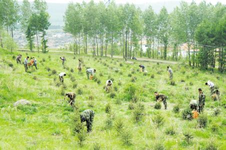 河南省超额完成今年造林任务