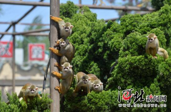 """""""五一""""就要到了,石家庄市动物园里的动物们期待着游客的到来."""