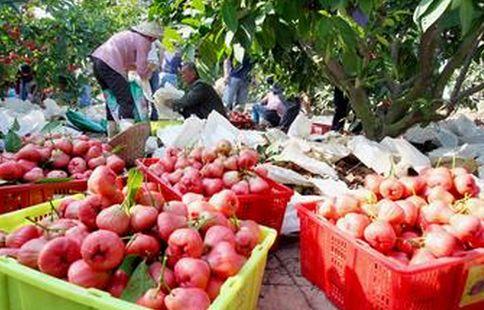 三门峡市退休干部任滢沧:发展富硒水果带动农户致富