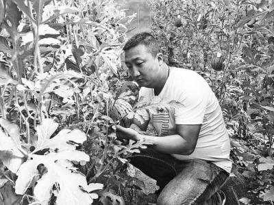 80后小伙洛阳建果园 带领当地农民致富
