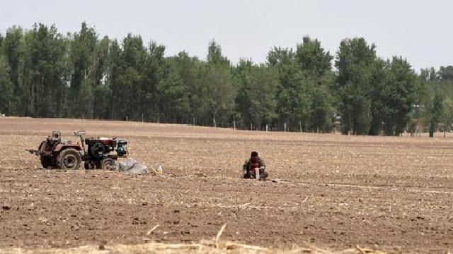 辽宁全省缺墒和作物受旱面积已缩减至83万公顷