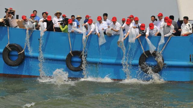 大连:海洋生物增殖放流取得丰硕生态及经济效益