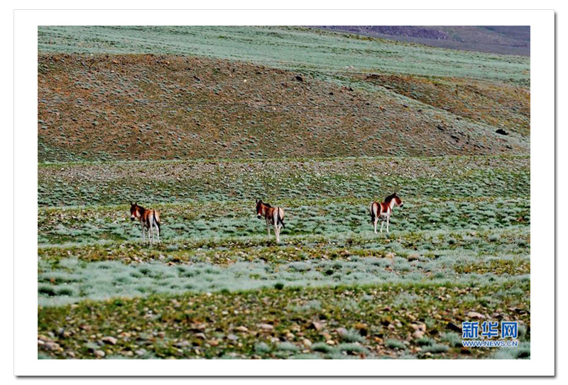 沿着绿色可持续发展道路前行——西藏构筑重要生态安全屏障纪实