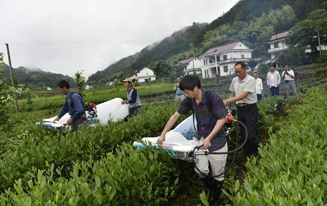 """安徽岳西:田间地头培训""""茶机""""技术"""
