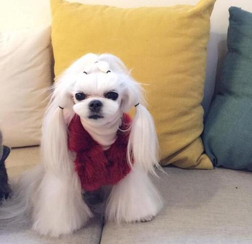 郭碧婷与爱犬自拍 快来看看那些可爱的萌宠
