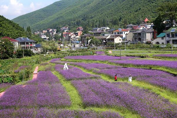 德清新农村 貌美景如画
