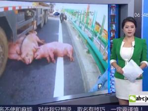 """湖北:高速上演""""猪在囧途"""""""