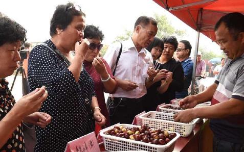 天津张家窝镇举办枣文化节