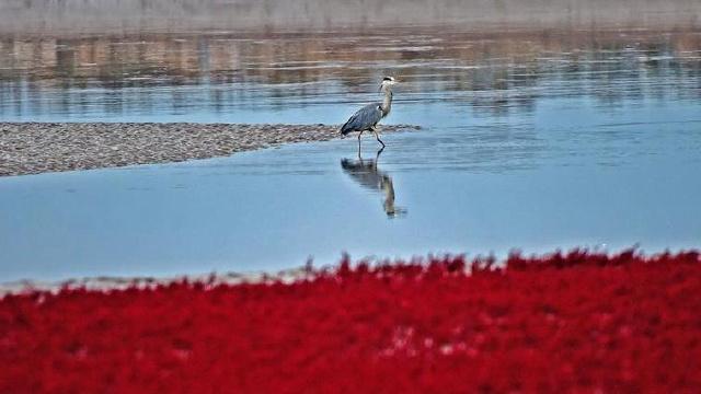 红海滩鸟趣
