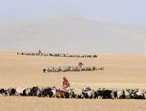 西藏摄影家第11期《阿旺次仁》——牧归