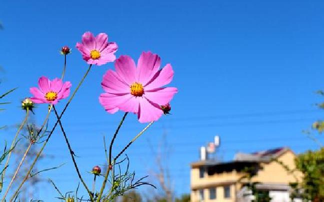 """冬日,我在普洱的暖阳里""""炫""""蓝"""