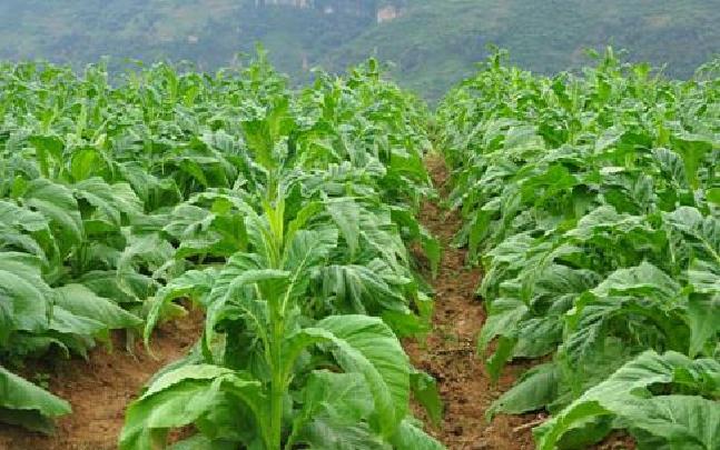 彝良县完成2016年烟草农用机械推广工作