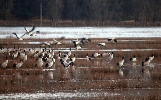 云南念湖湿地越冬候鸟数量增加