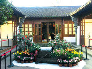 云南人凭身份证可免费看茶花游西湖