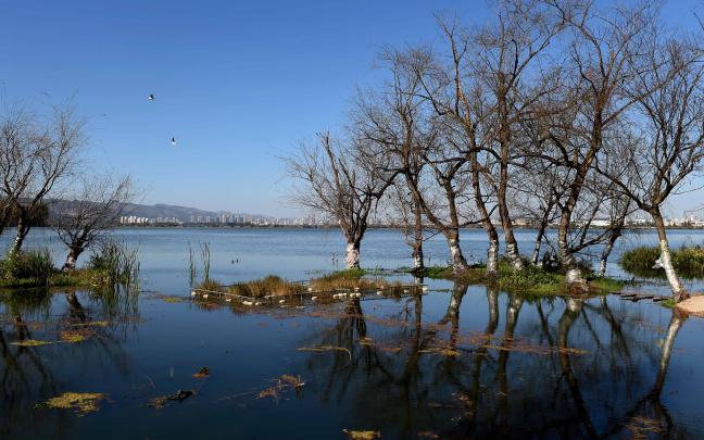 2016年云南滇池水质持续向好