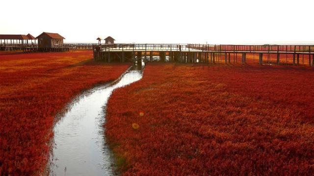 红海滩景区拿到国家5A级景区入场券