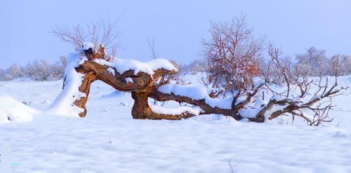 中央气象台发布暴雪黄色 寒潮蓝色预警