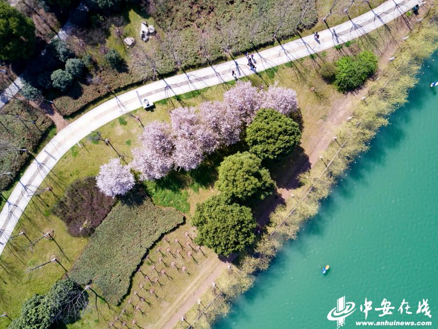 合肥天鹅湖水绿如蓝
