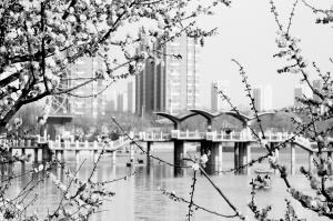 春花渐入佳境 快来这里赏花吧